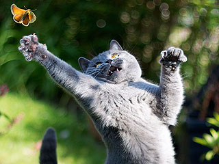 The Daily Treat: Catching Butterflies Is an Art Form for This Cat