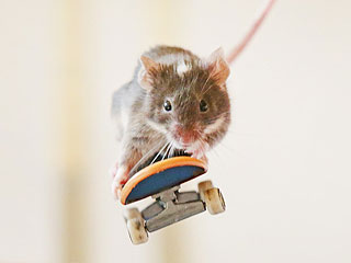 The Daily Treat: We Just Can't Handle This Mouse on a Skateboard