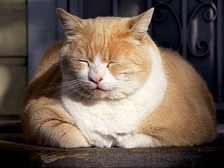The Daily Treat: This Cat Is Keeping His Eyes Closed Until It's the Weekend