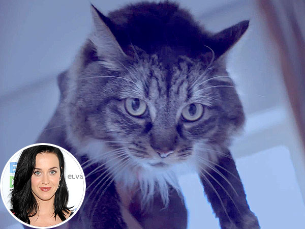 Katy Perry's Cat Kitty Purry Cameos in New Lyric Video Roar