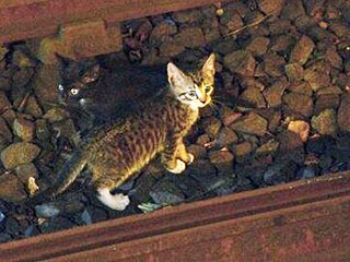 New York City Subway Shuts Down – for Kittens