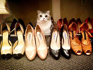 PHOTO: Taylor Swift's Cat Is Judging Her Shoe Selection