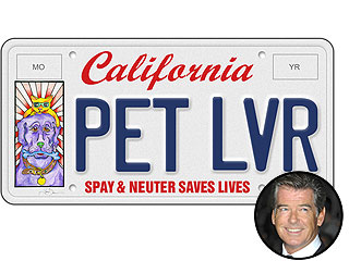 PHOTO: See Pierce Brosnan's Animal Drawings on a License Plate | Pierce Brosnan