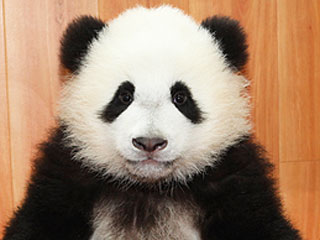 The Daily Treat: 7 Pictures to Help You Survive the Panda Cam Shutdown