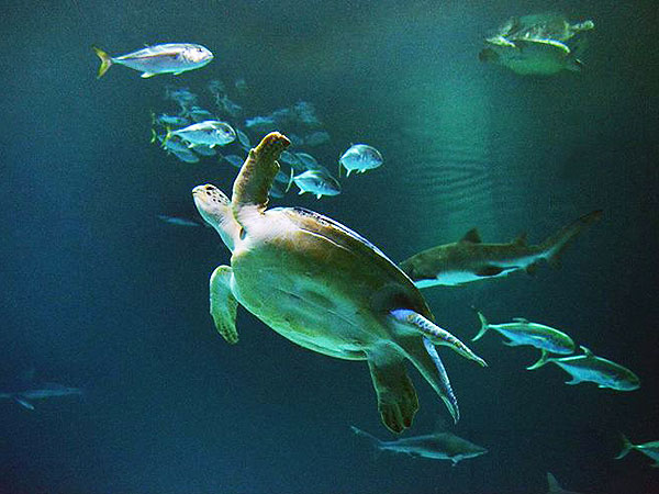 The Daily Treat: Rescued Sea Turtle Now Swimming in Vegas