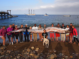 See Something Fishy? 18-Ft. Sea Creature Found Off the Coast of California