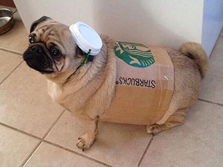 PHOTO: The Best Thing About Fall Is Actually Pugkin Spice Lattes