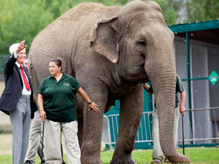 The Daily Treat: Bob Barker Pays Nearly $1 Million to Transport Elephants