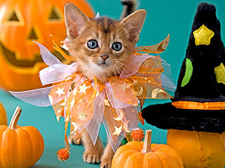 We Tried It: Dressing Up Your Cat for Halloween | Cats, Cute Pets, Pet News