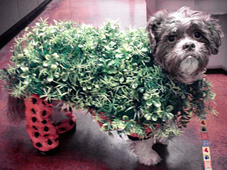 The Daily Treat: This Dog Dressed as a Chia Pet Wins Halloween
