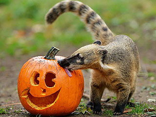 PHOTOS: Zoo Animals with Pumpkins!