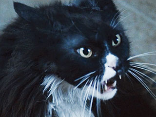 The Hunger Games Recasts Prim's Cat in Catching Fire