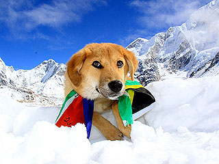 Rupee, the First Dog to Climb Mt. Everest, Is Also Monumentally Cute