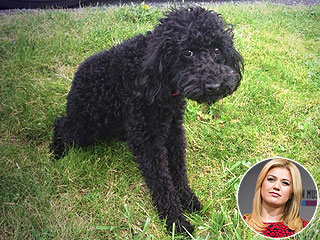 Kelly Clarkson Mourns Death of Her 'Best Friend,' Dog Joplin
