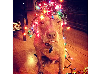The Daily Treat: You Don't Need a Christmas Tree When You Have This Dog