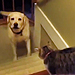 The Daily Treat: 3 Minutes of Dogs Afraid of Walking Past Cats