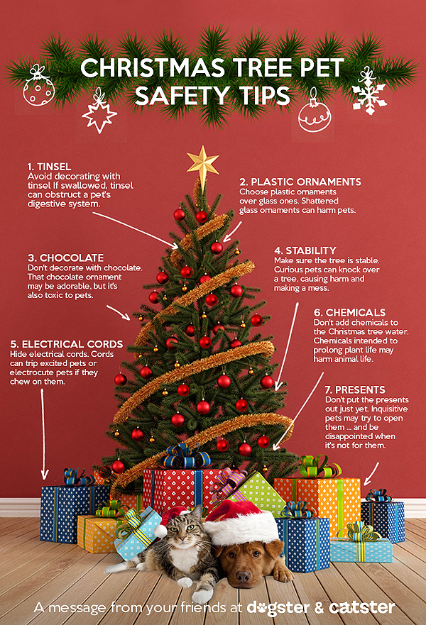 How to keep your christmas tree safe for pets photo - Tips to care for a natural christmas tree ...