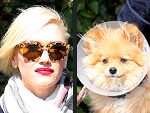 Stars and Their Pets: Gwen Stefani's Cone-y Dog | Gwen Stefani