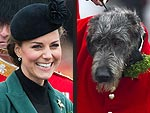 Stars and Their Pets: Kate's Irish Encounter | Kate Middleton
