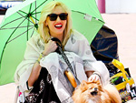 Stars and Their Pets: Gwen's Beach Bum | Gwen Stefani