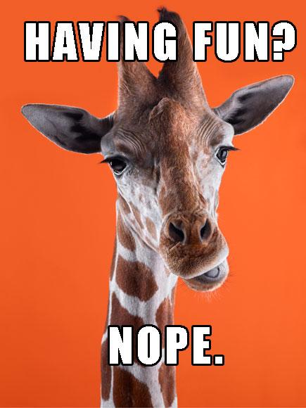 funny giraffe jokes - photo #20