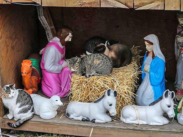 PHOTO: Cats Crash Brooklyn Nativity Scene| Cats, Funny Pets, Christmas