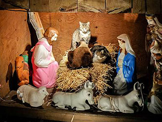 This Is What Happens When Cats Take Over an N.Y.C. Nativity Scene