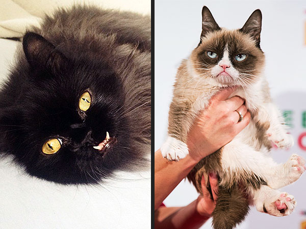 grumpy cat colonel meow more trending animals on the
