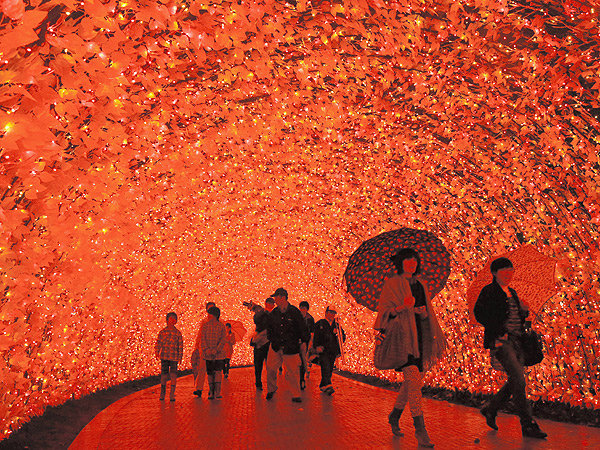 Blinded by Holiday Cheer: Japan's Installation of 7 Million Lights| Christmas