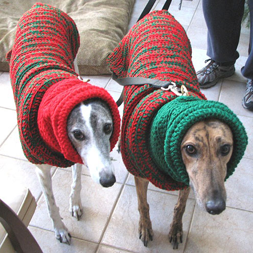 Ugly Christmas Sweaters on Cats and Dogs: Christmas 2013 : People.com