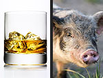 Whiskey vs. Pig: What Can'tJohnny Depp Live Without?