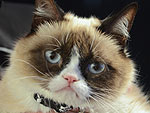 Can We Make Grumpy Cat Smile?