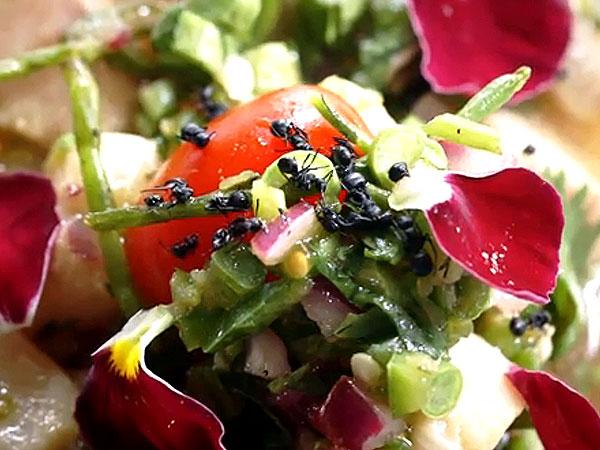 Ants on Tuna Ceviche