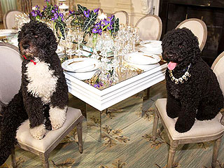 PHOTO: Bo & Sunny Obama Go All Out for State Dinner