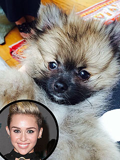 Meet Miley Cyrus's New Dog, Moonie: PHOTO