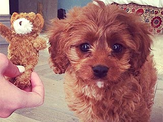 Meet Katy Perry's Prism Tour Mascot: Her New Dog Butters