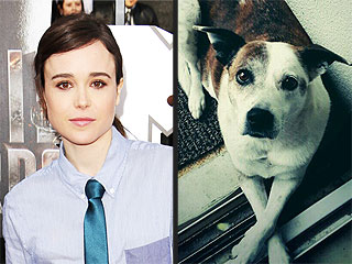 Ellen Page Is Renaming Her Fans's Dogs