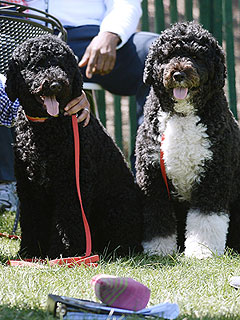 Bo & Sunny Are the MVPs of the White House Easter Egg Roll