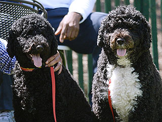 The Daily Treat: Bo & Sunny Are the MVPs of the White House Easter Egg Roll