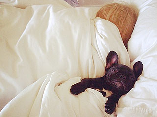 Lady Gaga's Pup Asia Is So Aww-dorable – See the Pics!