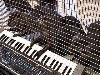 Here Are Some of the National Zoo's Otters Playing a Keyboard