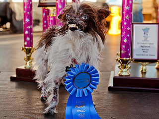 And 2014's World's Ugliest Dog Is ...