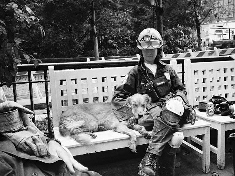 Meet Bretagne, the Last-Known Surviving Ground Zero Search Dog| Animals & Pets, Hero Pets, September 11th, Today
