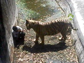 PHOTO: White Tiger Kills Man Who Climbed into Zoo Enclosure