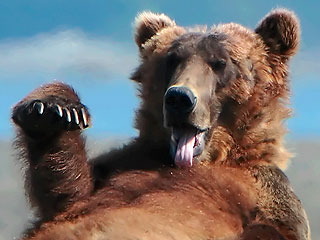 Siberian Man Fights off Bear with Old Computer