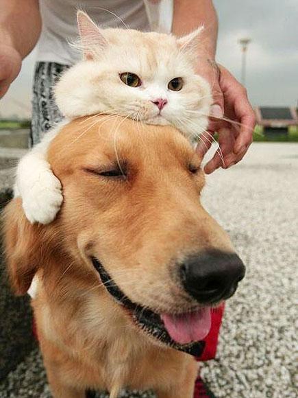 Δείτε 4 γάτες που προσπαθούν να αγαπήσουν... σκύλους!