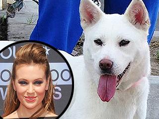 Alyssa Milano Rescues Abused Dog Found Tied to Pole | Animals & Pets, Cute Pets, Alyssa Milano