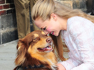 The Daily Treat: Amanda Seyfried's Dog Was Not Impressed by the Golden Globes