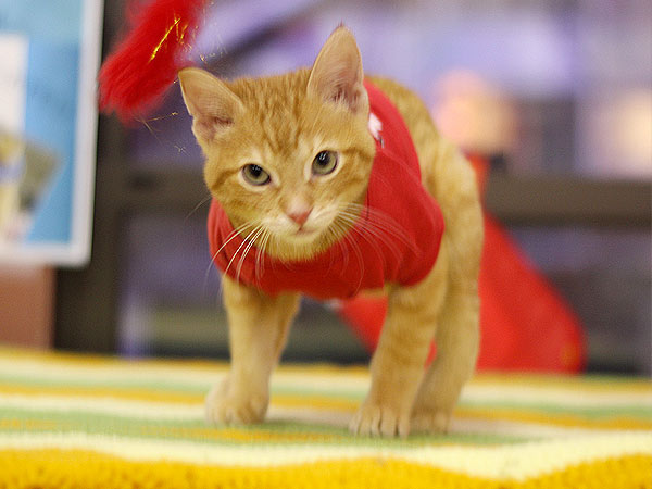 The Daily Treat: Born Unable to Walk, Stockings the Kitten Is Now on the Move| Animals & Pets, Cats, Animals & Pets, Cute Pets