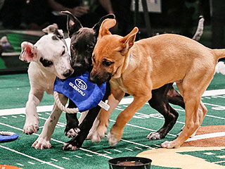 The 5 Best Pics from Puppy Bowl X | Animals & Pets, Cute Pets, Funny Pets, Pet News